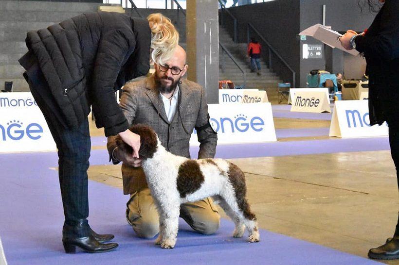 lagotto romagnolo esposizione cane canina