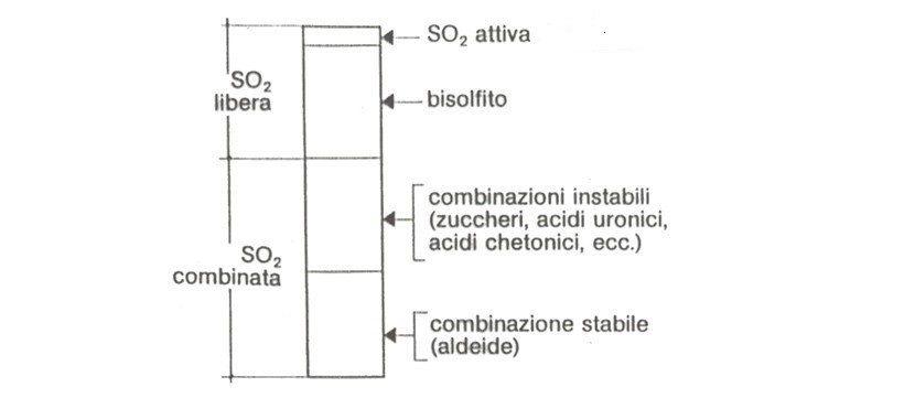 solfini vini naturali anidride solforosa