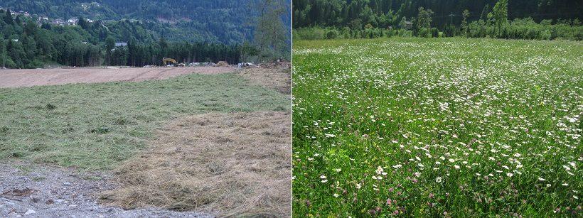 semina fresca erba
