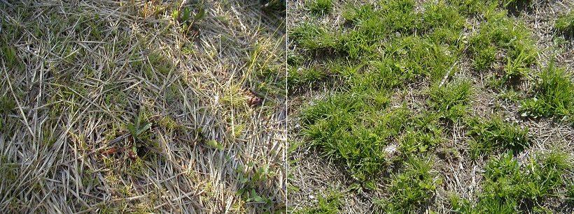 pacciamatura fieno erba prato
