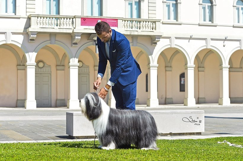 Bearded Collie Jacopo Masuero