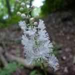 menopausa effetti cura piante