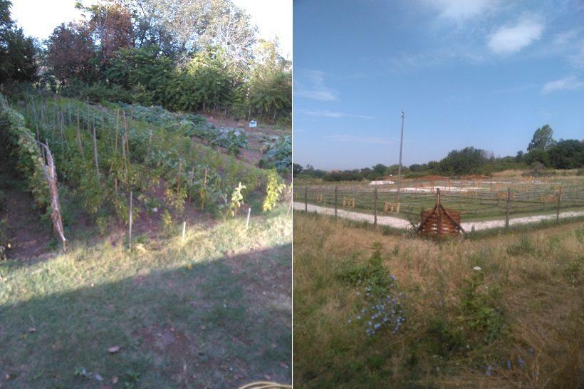 agricoltura periurbana ortinsieme roma