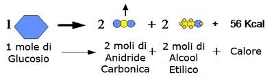fermentazione alcolica reazione