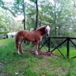 Piante velenose per i cavalli: conoscerle per evitarle