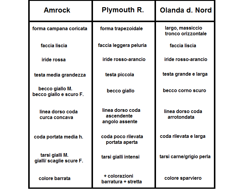 differenze razza gallina amrock blu d'olanda Plymouth Rock