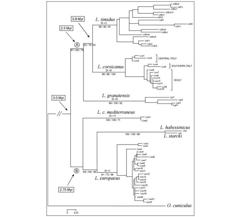 relazioni filogenetiche