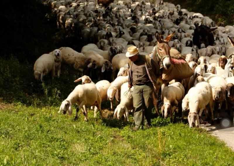 Pastorizia