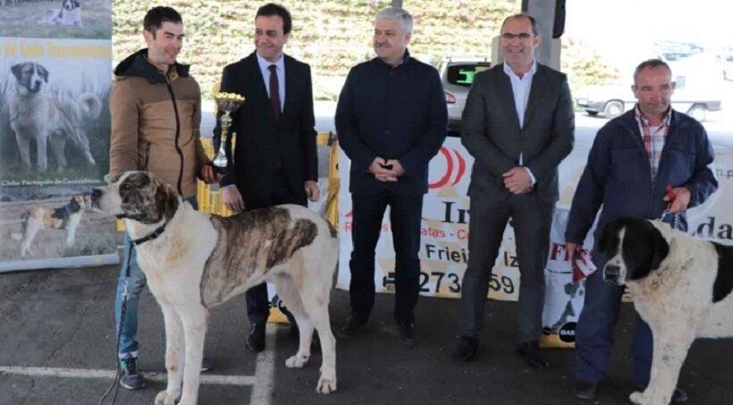 Expo Monográfica de Cão do Gado Transmontano