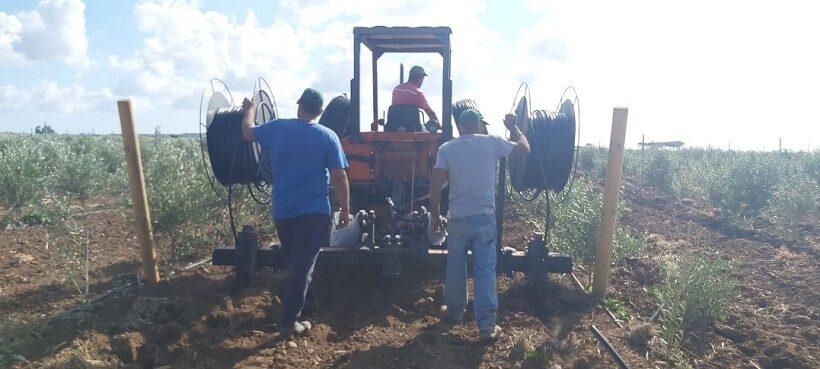 Sub irrigazione su oliveto